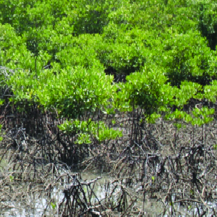 16-21/11/2020: Khóa đào tạo trực tuyến về Chỉ số sức khỏe rừng ngập mặn