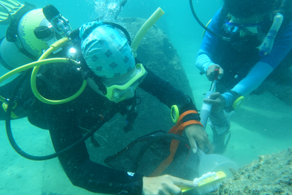 """Hội thảo tập huấn của IOC/WESTPAC về """"Giới thiệu về lặn biển khoa học, thu và xử lý mẫu tảo hai roi sống đáy (Dinoflagellates)"""""""